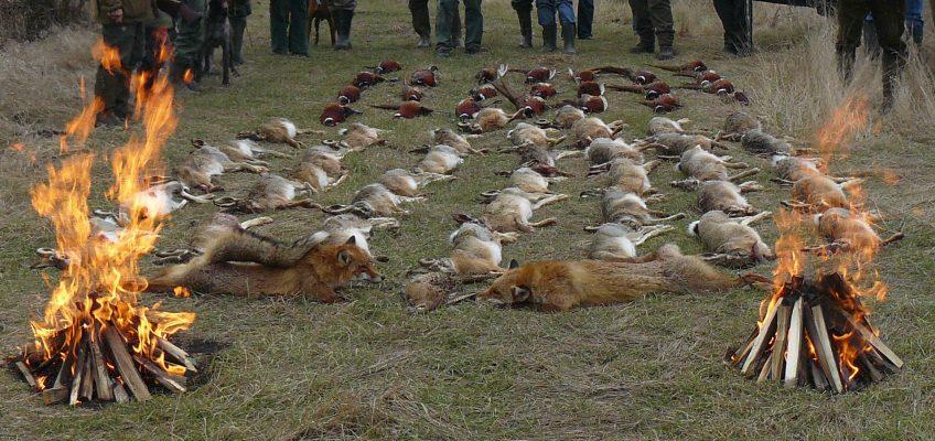 Gondolatok a vadászatról – A teríték
