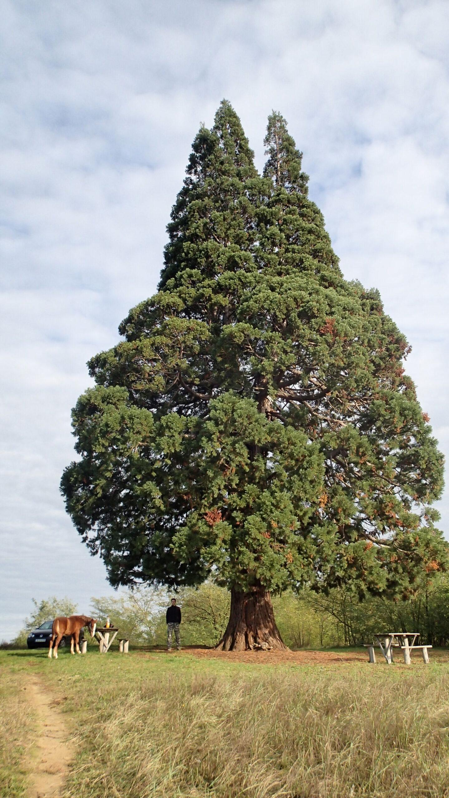 öreg fák - krónika